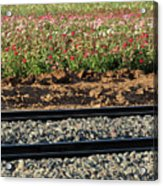 Rails And Roses Acrylic Print