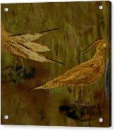 Rain Bird Hunt Acrylic Print