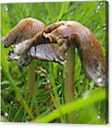 Rain Bombarding Mushroom Settlement. Acrylic Print