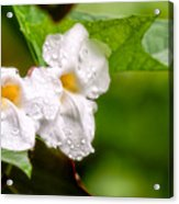 Rain Drenched Pair Acrylic Print