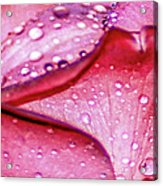Rain Drop Jewels  Acrylic Print