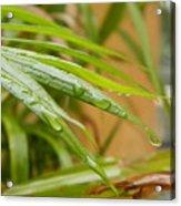 Rain Droppe1 Acrylic Print