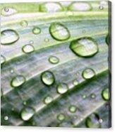 Rain Drops On A Leaf Acrylic Print