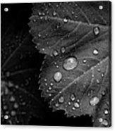Rain Drops On Leaf Acrylic Print