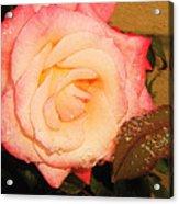 Rain Flower Rose Acrylic Print