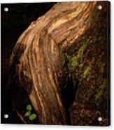 Rain Forest Light Acrylic Print