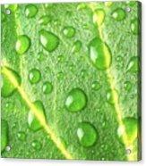 Rain On A Leaf Acrylic Print