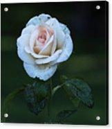 Rain Rose Acrylic Print