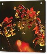 Rain Soaked Leaves-1 Acrylic Print