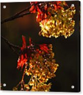 Rain Soaked Leaves-2 Acrylic Print