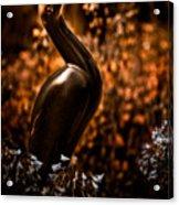 Rainbird Acrylic Print