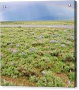 Rainbow And Lupine, Grand Teton Nm, Wyoming Acrylic Print