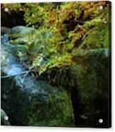 Rainbow Autumn Ferns At Pickle Creek 6303 H_3 Acrylic Print