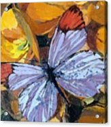 Rainbow Butterfly, For Matisse Acrylic Print
