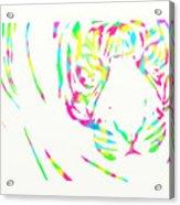 Rainbow Coloured Tiger Acrylic Print
