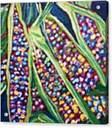 Rainbow Corn Acrylic Print