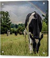 Rainbow Cow Acrylic Print