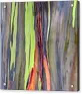Rainbow Eucalyptus 13 Acrylic Print