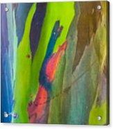 Rainbow Eucalyptus 7 Acrylic Print