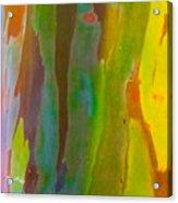 Rainbow Eucalyptus 8 Acrylic Print