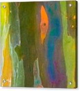 Rainbow Eucalyptus 9 Acrylic Print
