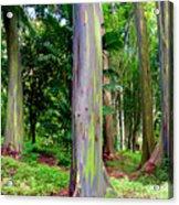 Rainbow Eucalyptus Acrylic Print