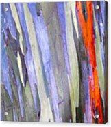 Rainbow Eucalyptus Tree Acrylic Print