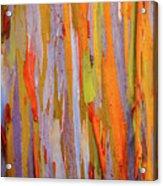 Rainbow Eucalytpus Acrylic Print