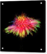Rainbow Flower On Black Acrylic Print