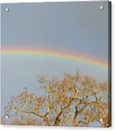 Rainbow Illumined Oak Tree Acrylic Print