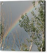 Rainbow In The Trees Acrylic Print
