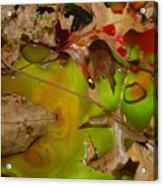 Rainbow Leaves 3 Acrylic Print