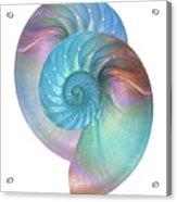 Rainbow Nautilus Pair On White Acrylic Print