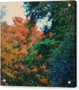 Rainbow Of Fall Acrylic Print