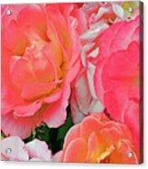 Rainbow Of Roses Acrylic Print