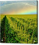 Rainbow Over The Cornfields Acrylic Print