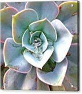Rainbow Succulent - My Cup Runneth Over Acrylic Print