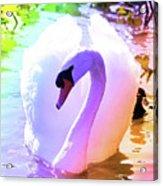 Rainbow Swan Acrylic Print
