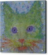 Rainbow Tomcat Acrylic Print