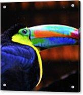 Rainbow Toucan Acrylic Print