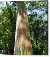 Rainbow Tree Acrylic Print by Pierre Leclerc Photography