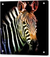 Rainbow Zebra Acrylic Print
