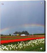 Rainbows At Tulip Festival Acrylic Print