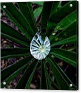 Raindrop Ammonite Acrylic Print