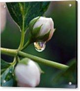 Raindrop Garden Acrylic Print