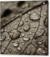 Raindrops #1 Acrylic Print