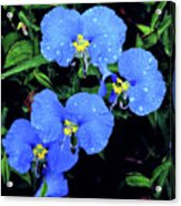 Raindrops In Blue Acrylic Print