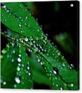 Raindrops In My Garden 1 Acrylic Print