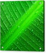 Raindrops ... Acrylic Print