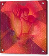 Raindrops On A Beautiful Rosebud Acrylic Print